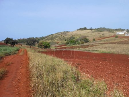 Landscape of partly grassy open area with bright red terra rossa (red mediterranean) bauxite soil, having sparse number of trees and houses beneath the clear blue sky.