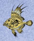 Zeus faber saint pierre fish on a blue backgroung