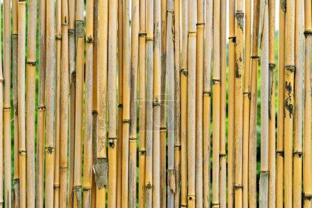 belle texture de fond de tiges de bambou jaune de près. modèle pour la conception de papier peint