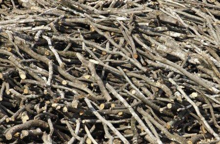 Photo pour Pile de bois de chauffage, séchage comme backround - image libre de droit