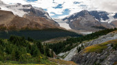 View of the Athabasca glacier from Wilcox peak trail and forefront forest and mountains in Jasper National Park, Alberta, Canada.