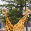 Couple of nubian giraffes together, sub specie of ...