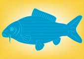 Schematic vector drawing of a fish carp side view