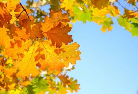 Photo pour Beau fond d'automne avec un feuillage au premier plan - image libre de droit