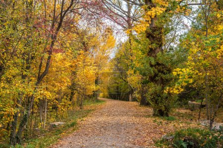 Photo for View of a path among the trees in a very colorful forest in autumn - Royalty Free Image