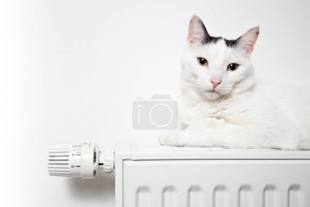 white cat lies on the radiator