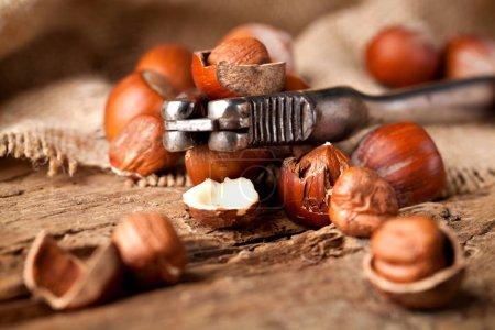 Hazelnuts on old wooden background
