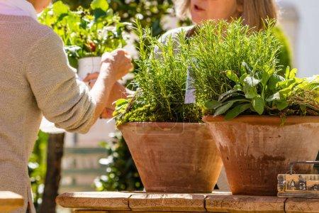 Female florists or gardeners working in flower sho...