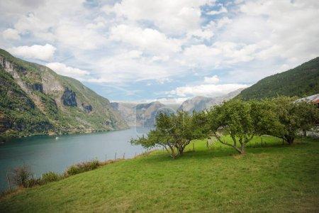Photo pour Beaux arbres verts et herbe sur la côte d'Aurlandsfjord dans les montagnes majestueuses, Flam (Aurlandsfjorden), Norvège - image libre de droit