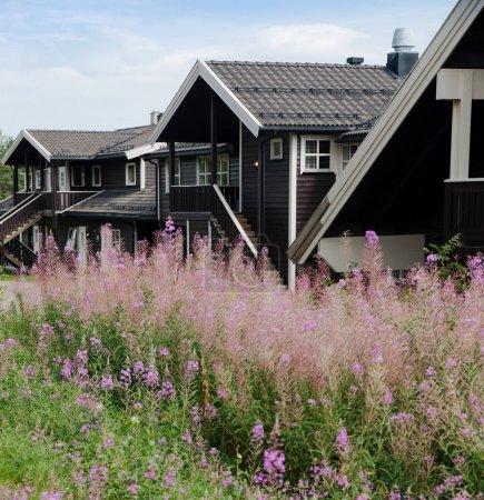 Photo pour TRYSIL, NORVÈGE - 26 JUILLET 2018 : fleurs de lupin et maisons de vie noires dans la plus grande station de ski Trysil en Norvège - image libre de droit