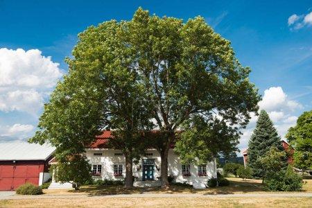 Photo pour Hamar, Hedmark, Norvège - 26 juillet 2018: vue panoramique sur le grand arbre devant la maison de vie - image libre de droit