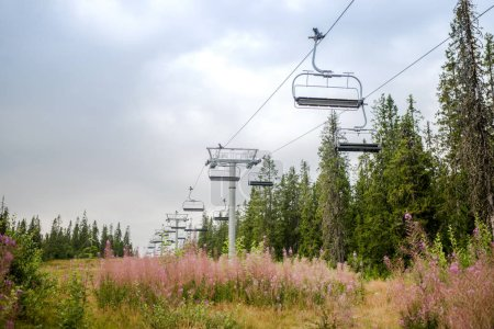 ski lift over field with lupine flowers, Trysil, Norway's largest ski resort