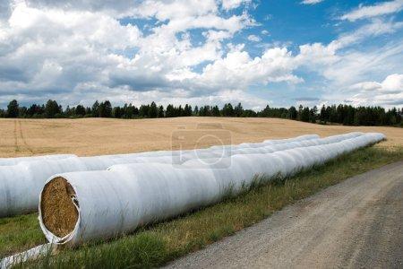 Photo pour Meules de foin enveloppés sur champ sous un ciel nuageux, Hamar, Hedmark, Norvège - image libre de droit