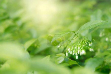 Foto de Las hojas verdes naturales en el cuerpo y la luz solar con espacio de copia. Hermosa naturaleza verde fondo. Un mundo seguro y un concepto ecológico. - Imagen libre de derechos