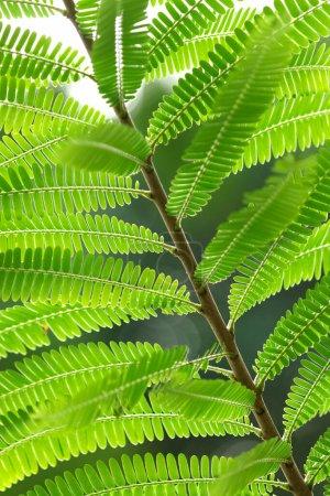 Foto de Las hojas verdes naturales para el fondo. Un mundo seguro y un concepto ecológico. - Imagen libre de derechos