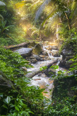 Landscape of beautiful small waterfall and stream that flows from the mountain in rainforest with sun shine. Forests with growing vegetation and perfect environments