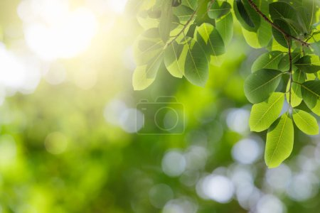 Photo for Natural green leaves on bokeh and sun light with copy space. Beautiful green nature background. Safe world and ecology concept. - Royalty Free Image