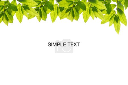 Photo for Natural green leaves on white background with copy space for banner and your text. ecology background concept. - Royalty Free Image
