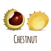 Chestnut icon realistic style