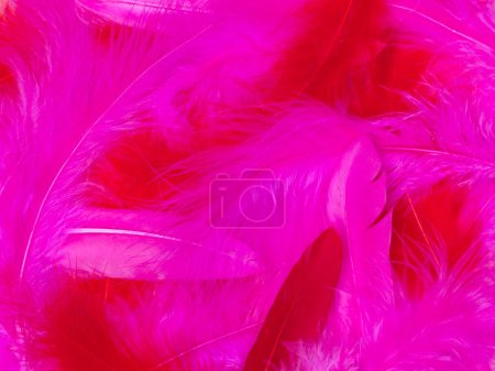 Photo for Beautiful pink valentine day background with group of pink and red feathers - Royalty Free Image
