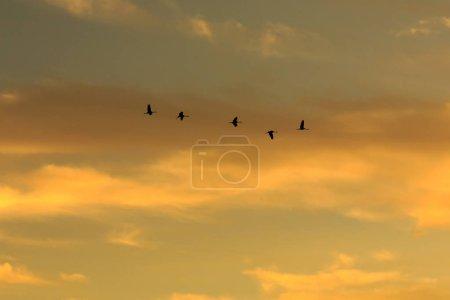 birds flying in dramatic sunset sky