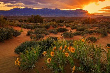Golden sunset with wildflowers at the Henry Mountains, Utah, USA