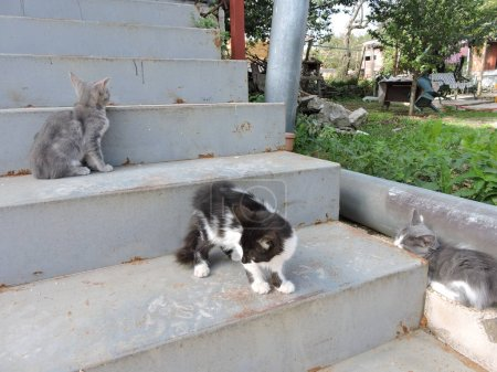 Kittens on Outdoor Stairs...