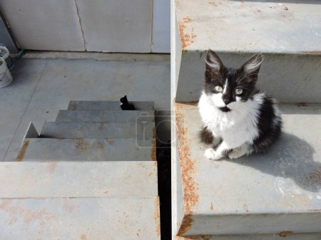 Black and White Cat on Stairs...