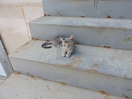 Gray Cat on Stairs...