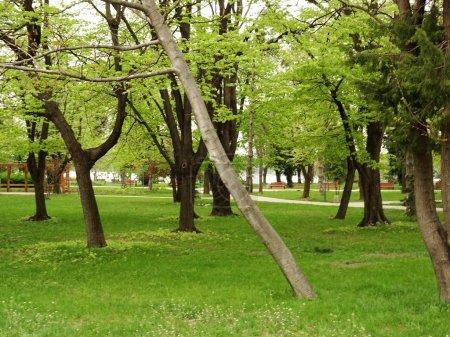 Photo pour Parc de la ville verte vide - image libre de droit