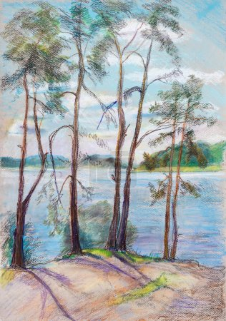 Photo pour Paysage d'été, pins hauts près de rver Volga - image libre de droit