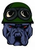 bulldog face with helmet. Motorcycle rider illustration.