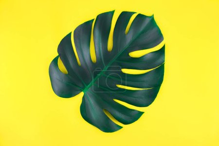 Photo for One tropical jungle monstera leaves isolated on bright yellow background. Flat lay style. - Royalty Free Image