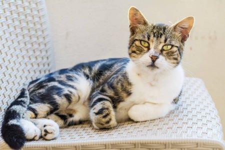 Photo pour Fermez-vous vers le haut du projectile du chat mignon - image libre de droit