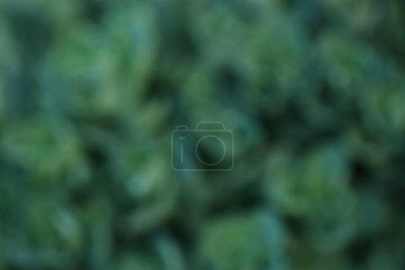 Photo for Abstract natural green background - Royalty Free Image