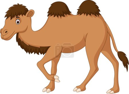 Cute camel cartoon isolated on white background