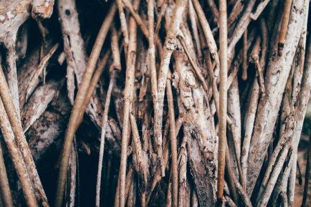 Foto de Branches of tree  on background,close up - Imagen libre de derechos