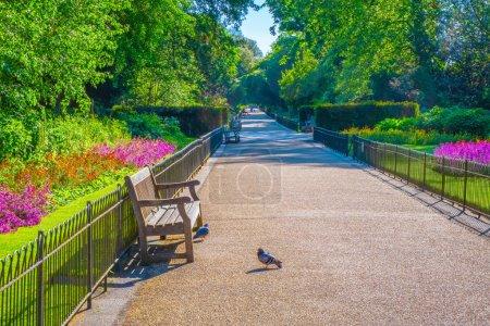 Belle nature à Kensington Gardens à Londres, Royaume-Uni