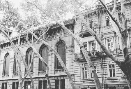 scène de rue avec de vieux bâtiments et arbres