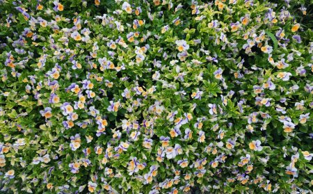 Photo for Flowers as a background. Beautiful natural composition at the summer time - Royalty Free Image