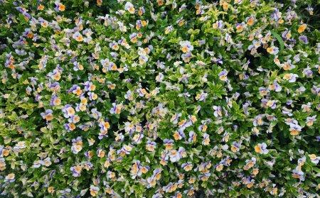 Foto de Flores como fondo. Hermosa composición natural en verano - Imagen libre de derechos