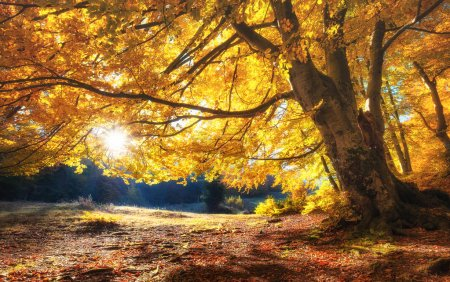 Photo for Sun rays through autumn trees. Natural autumn landscape in the forest. Autumn forest and sun as a background. Nature at the autumn time - Royalty Free Image