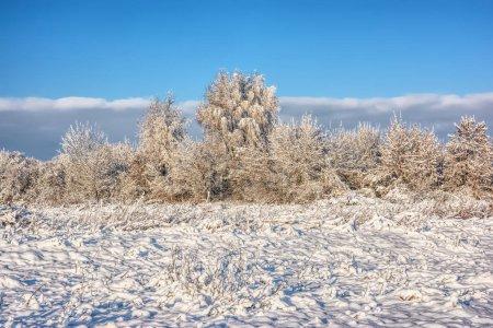 Foto de Árboles en la nieve en el parque de invierno. - Imagen libre de derechos