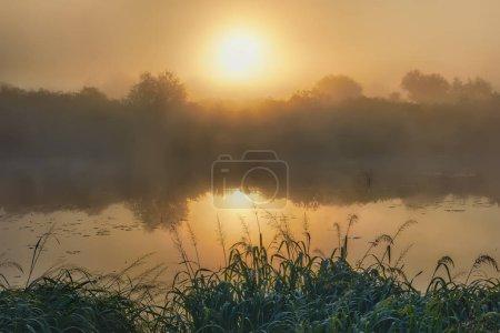Photo pour Soleil, brouillard le matin sur le fleuve et la côte avec des arbres. - image libre de droit