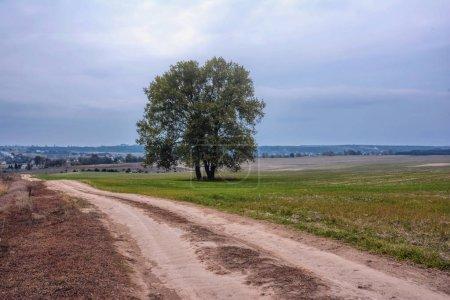 Photo pour Chemin de terre à travers un champ et bois sur le côté. - image libre de droit