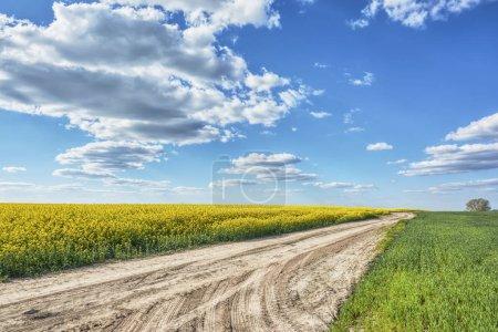 Photo pour Ciel bleu avec nuages sur route de terre et champ avec viol . - image libre de droit