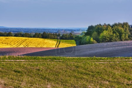 Photo for Rural landscape - plowed field, rape, meadows and forest. - Royalty Free Image