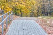 """Постер, картина, фотообои """"Аллея, вымощенной булыжником в Осенний парк, деревья с пожелтевшие листья."""""""