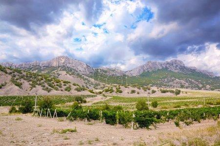 Photo pour Les vignobles, les montagnes et les nuages d'orage. - image libre de droit