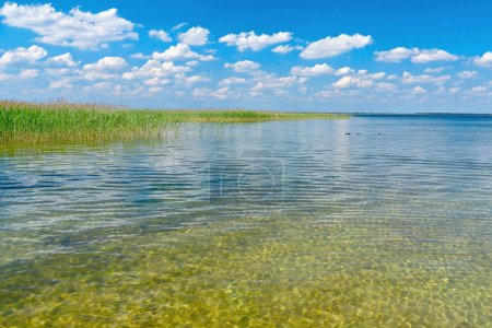 Photo for Lake with clear water and reeds on a sunny day. Blue sky with clouds over it. - Royalty Free Image